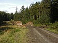 Forestry track and log stack by the Nant y Glog - geograph.org.uk - 1533627.jpg
