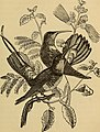 Four feet, wings, and fins (1879) (14779174094).jpg