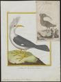 Fregilupus varia - 1700-1880 - Print - Iconographia Zoologica - Special Collections University of Amsterdam - UBA01 IZ15800173.tif