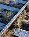 Frost on tufts of grass by railway track.jpg