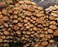 Fungus, Lisburn (5) - geograph.org.uk - 1524362.jpg
