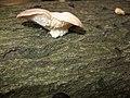 Fungus (7104124631).jpg