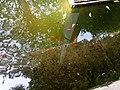 Garden of dreams, Thamel 07.jpg