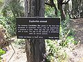 Gardenology.org-IMG 4356 hunt0904.jpg