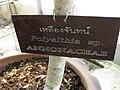 Gardenology.org-IMG 8079 qsbg11mar.jpg