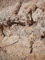 Geologic formations at Skull Rock (28969582032).jpg