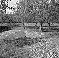 Geoogste appels, Bestanddeelnr 252-0222.jpg