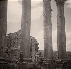 Gerasa 10, Säulen des Artemis-Tempels 1960.jpg