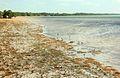 Gfp-florida-keys-long-key-state-park-birds-wading-on-shore.jpg