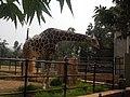 Giraffe, Mysore Zoo 01.jpg