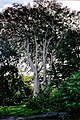 Glebe House Gallery - Tree - geograph.org.uk - 1328801.jpg