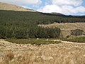 Glenummera Valley, Conifers and rough grazing land - geograph.org.uk - 791903.jpg