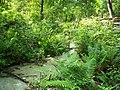 Gold Head Branch SP ravine stream02.jpg