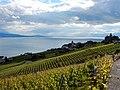 Grandvaux, Bourg-en-Lavaux, Switzerland - panoramio (6).jpg