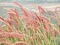 Grassnatureshot.jpg