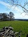 Grazing land at Scotsburn - geograph.org.uk - 1803443.jpg