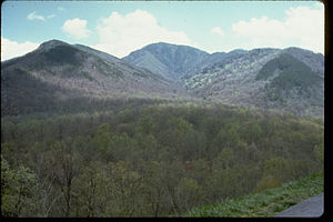 Great Smoky Mountains National Park GRSM8833.jpg