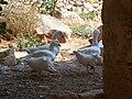 Grotta Mangia pane - panoramio (21).jpg
