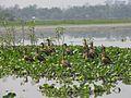 Group of bird.jpg