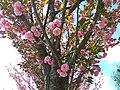 Gryshko botanical garden (Apr 2018) 10.jpg