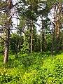 Gryshko botanical garden (May 2018) 18.jpg