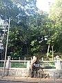 HKU 港大 near 香港島 半山區 Mid-Levels 般咸道 Bonham Road 老榕樹 old banyan trees May 2018 LGM 樹木辦 after cutting 修前後 02.jpg