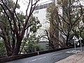 HK ML 半山區 Mid-levels 舊山頂道 Old Peak Road February 2020 SS2 07.jpg