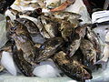 HK Sheung Wan Market 石斑魚 fishes May-2012.JPG