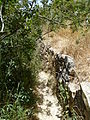 Hadassah Trail P1150511.JPG