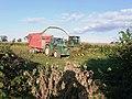 Harvesting Maize - geograph.org.uk - 1544304.jpg