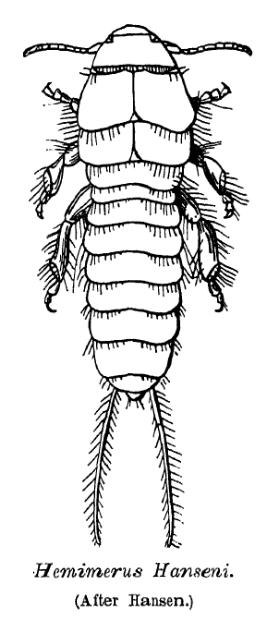 Segments and tagmata of an arthropod[235] The head and thorax are fused in some arthropods, such as crabs and lobsters.
