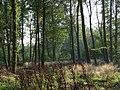 Hens Wood - geograph.org.uk - 262098.jpg