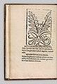 Herbarium MET DP327890.jpg