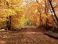 Herbst 7.jpg