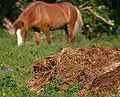 Hestemøj.jpg