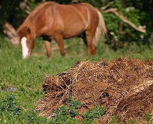 Manure pile- Wikipedia