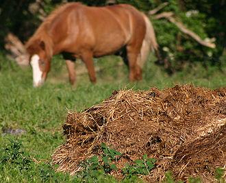 Organic fertilizer - Decomposing animal manure, an organic fertilizer source