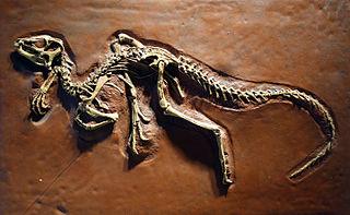 Heterodontosauridae family of reptiles (fossil)