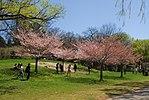 High Park, Toronto DSC 0214 (17205865548).jpg
