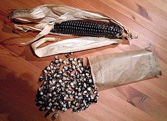Blue corn - Image: Hopi Blue Corn