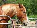 Horse (4159155767).jpg