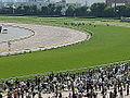 Horse racing @ Tokyo Race Course @ Fuchu (13934260599).jpg