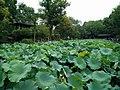 Humble Administrator's Garden, Suzhou, China (2016-08-20) - 09.jpg