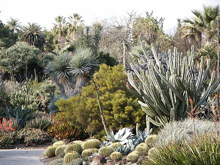 Succulent plants are well-adapted to survive long periods of drought. Huntington Desert Garden Cactus (etc).jpg