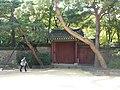 Hyehwa fall 2014 124 (Changgyeonggung).JPG
