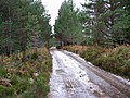 Icy Track in Abernethy Forest - geograph.org.uk - 1114068.jpg