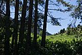Ile-Alatau national park, May, 2018-9.jpg
