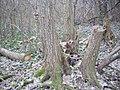 Illegális fakitermelés.jpg