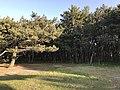 Imazu Pine Grove 7.jpg