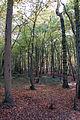 In The Woods (1569886109).jpg